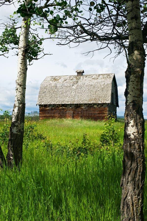 Zaniechana stajnia z osikowymi drzewami i trawiastym polem fotografia stock