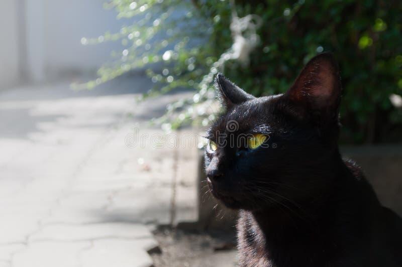 Zaniechanego crossbreed czarny kot pod światłem słonecznym zdjęcia stock