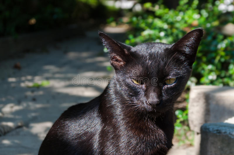 Zaniechanego crossbreed czarny kot pod światłem słonecznym obrazy royalty free