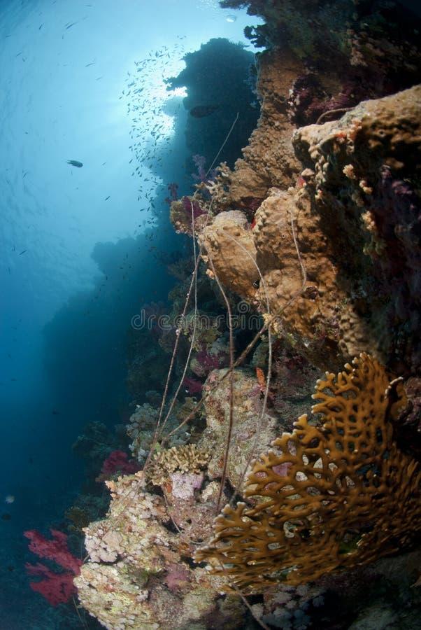 zaniechanego koralowego połowu bezprawne linie rafa fotografia royalty free