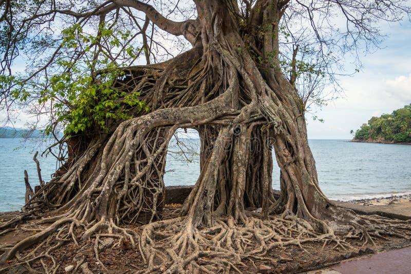 zaniechany andaman budynek zakrywał ind wyspy wysp korzeni Ross ruinę zdjęcia royalty free