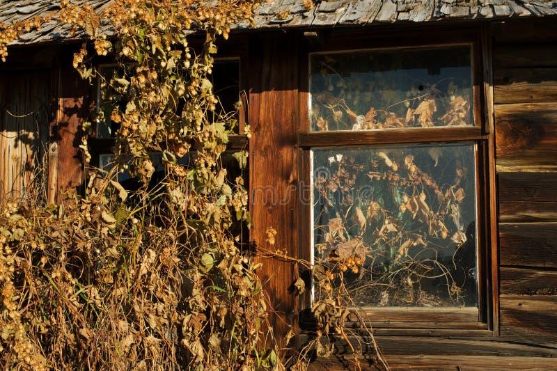 Zaniechany bela domu szczegół ściana i okno fotografia stock