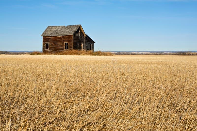 Zaniechany dom w zbierającym pszenicznym fieldfall fotografia stock