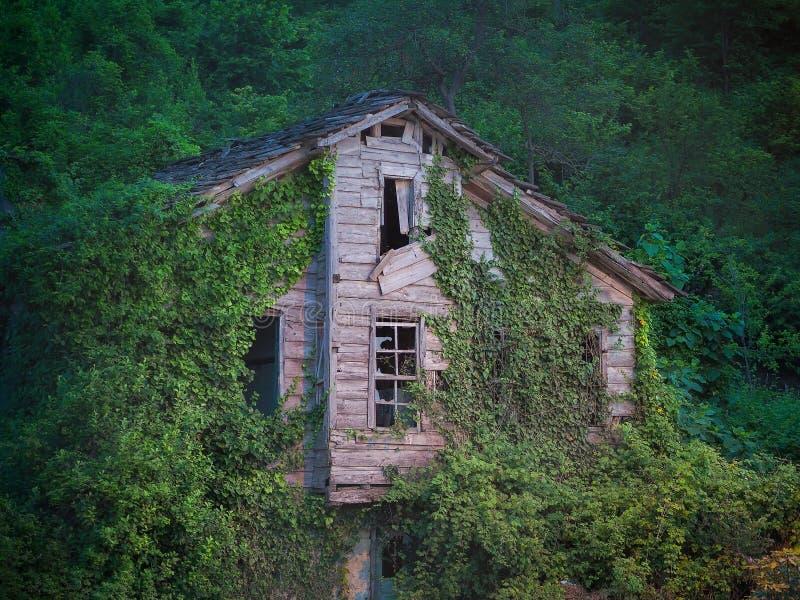 Zaniechany drewniany dom zakrywający z zielonym bluszczem obraz royalty free