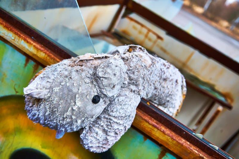 Zaniechany dzieciniec w Chernobyl wyłącznej strefie Kopachi wioska przegrane zabawki Przemoc przeciw dzieciom nadu?ycie plciowy obrazy stock
