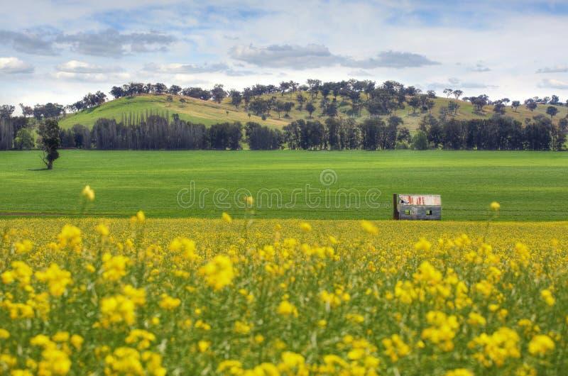 Zaniechany gospodarstwo rolne dom w polach Canola obrazy royalty free