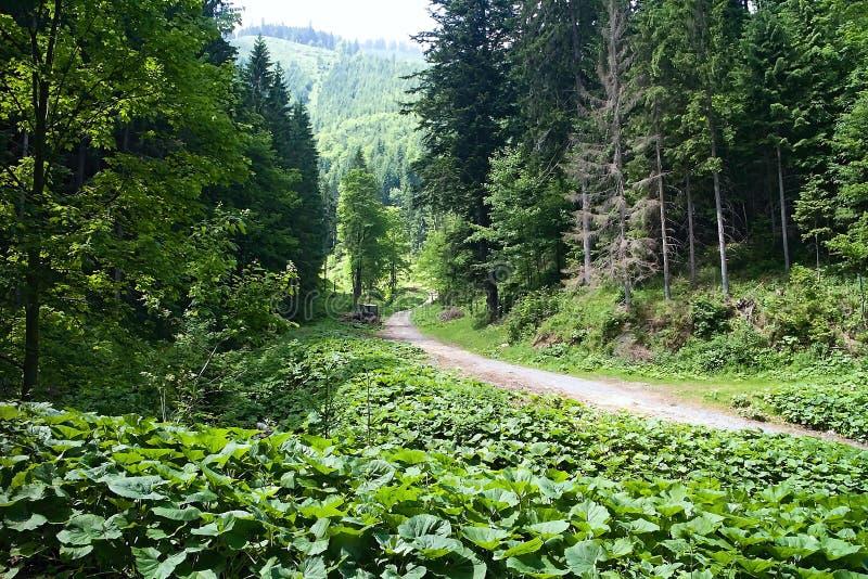 Zaniechany lasowy ciągnik przy rozdrożami Ilanovska dolina fotografia stock