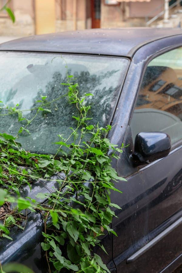 Zaniechany samochód przerastający z pięcie roślinami pożar zdjęcie stock