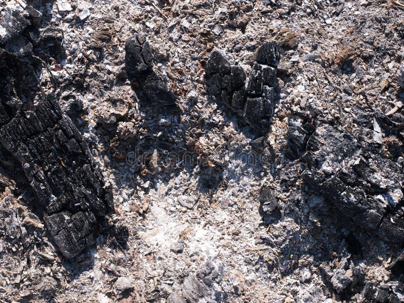 Zanieczyszczający płonący popiół od przemysłowego i gospodarstwa domowego odpady zdjęcia royalty free