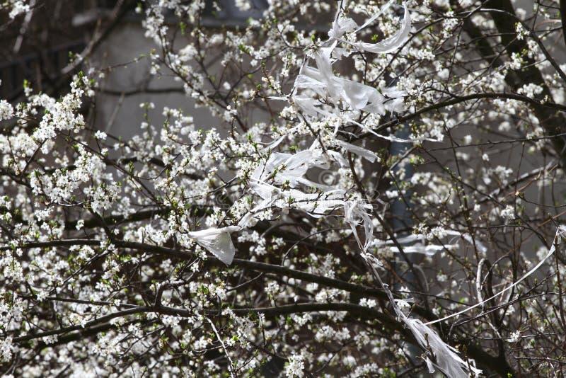 zanieczyszczenie Klingerytu odpady na kwitnącym sadu drzewie w wiośnie Środowiska zanieczyszczenie, globalny nagrzanie i zmiany k zdjęcia royalty free