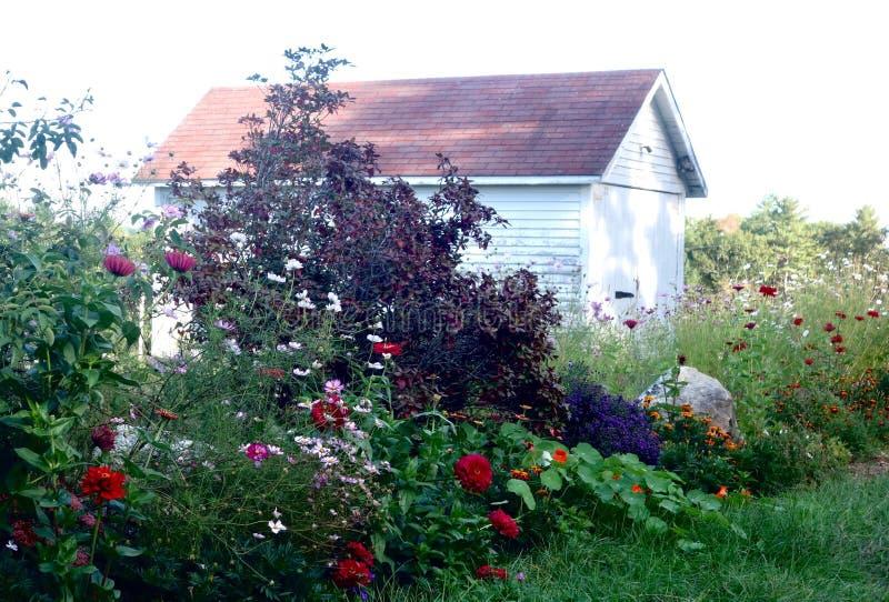 Zaniedbany kraju kwiatu ogród i jata zdjęcie royalty free