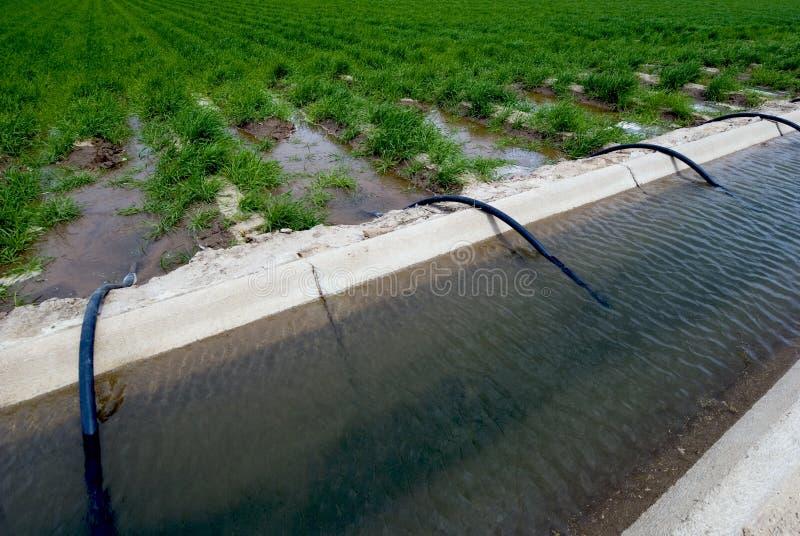 Zanja de irrigación del campo imagen de archivo libre de regalías