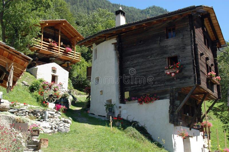 Zanna in alpi svizzere fotografia stock libera da diritti