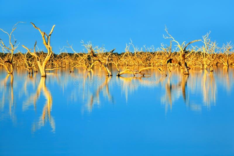 zanurzający drzewa obrazy royalty free