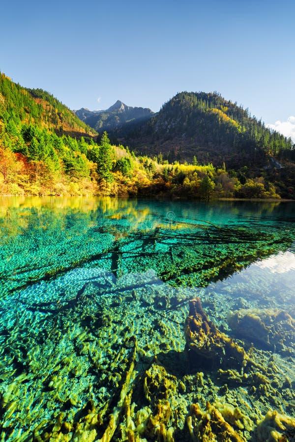 Zanurzający drzewni bagażniki w kryształ wodzie Pięć Kwiat jezioro obrazy royalty free