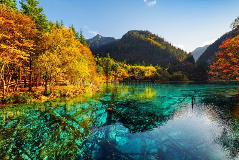 Zanurzający drzewni bagażniki w lazur wodzie Pięć Kwiat jezioro obrazy stock