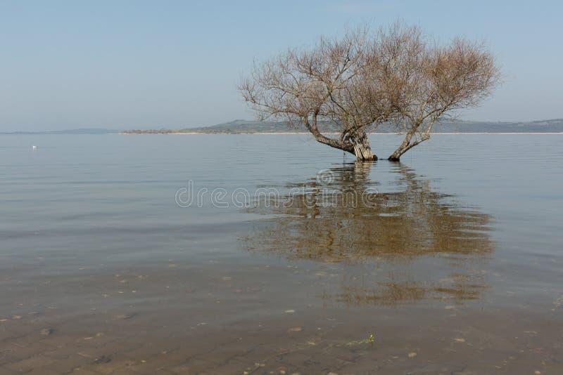 Zanurzający drzewo zdjęcia stock