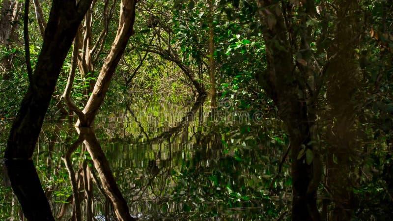 Zanurzający las w Brazylia zdjęcie stock