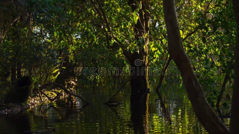 Zanurzający las w Brazylia obraz stock