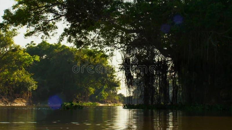 Zanurzający las w Brazylia zdjęcia stock