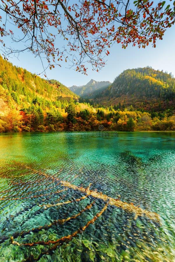 Zanurzający spadać drzewa w szmaragd wodzie Pięć Kwiat jezioro zdjęcia stock