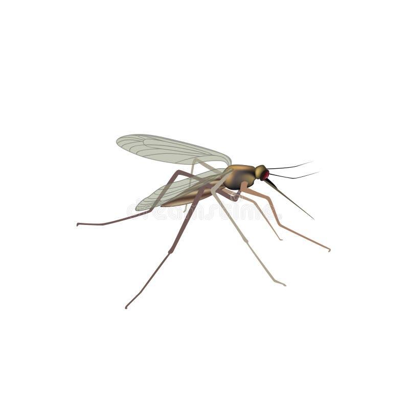 Zanzara isolata Illustrazione della zanzara Vista di macro dell'insetto illustrazione di stock