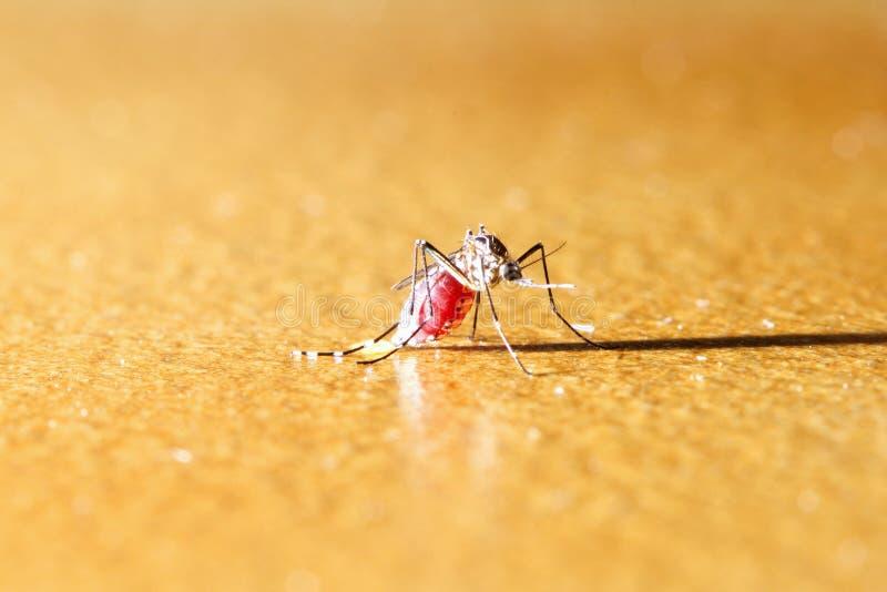 Zanzara sul pavimento immagini stock libere da diritti