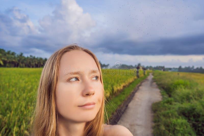 Zanzare intorno ad una donna sulla natura sul campo immagini stock