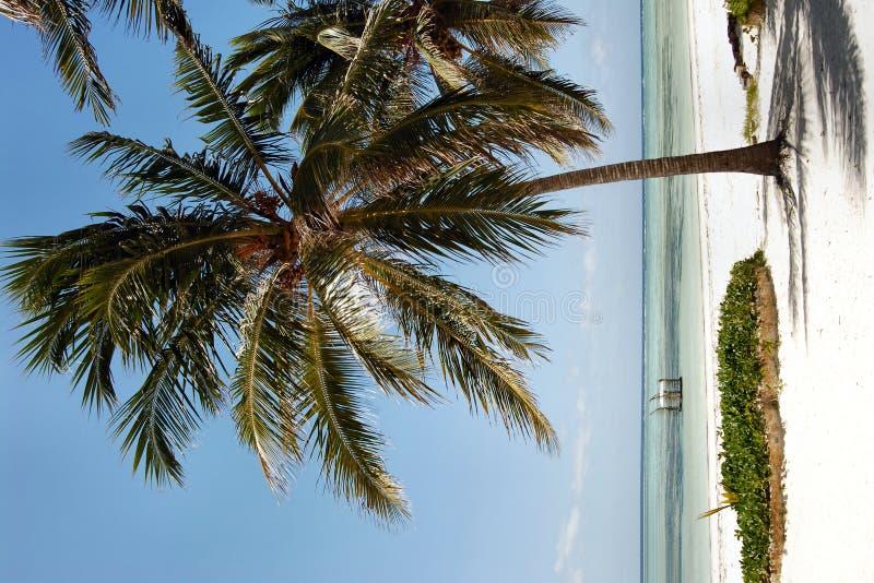 Zanzibar beach royalty free stock image