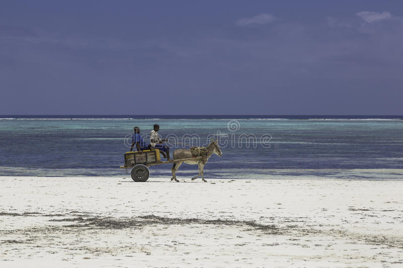 Zanzibar beach. Local people in their small donkey carts on the Matemwe Beach in Zanzibar stock image