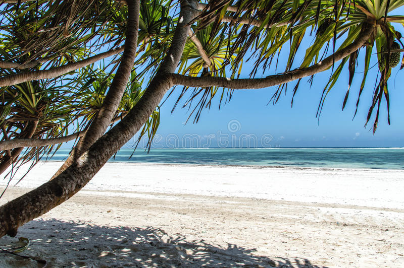 Zanzibar. A deserted beach on the tropical island of Zanzibar stock photo