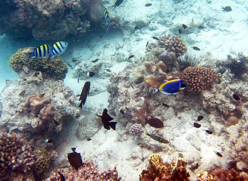 Zanzibar fiskar arkivfoton