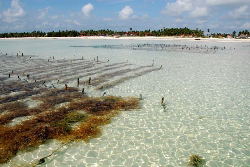 Zanzibar island royalty free stock photos