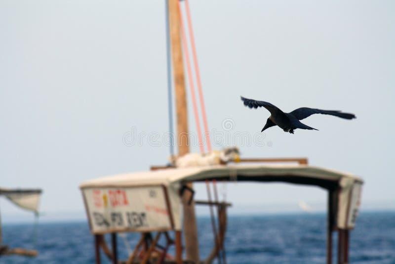 Zanzibar, Nungwi: corvo imagens de stock royalty free