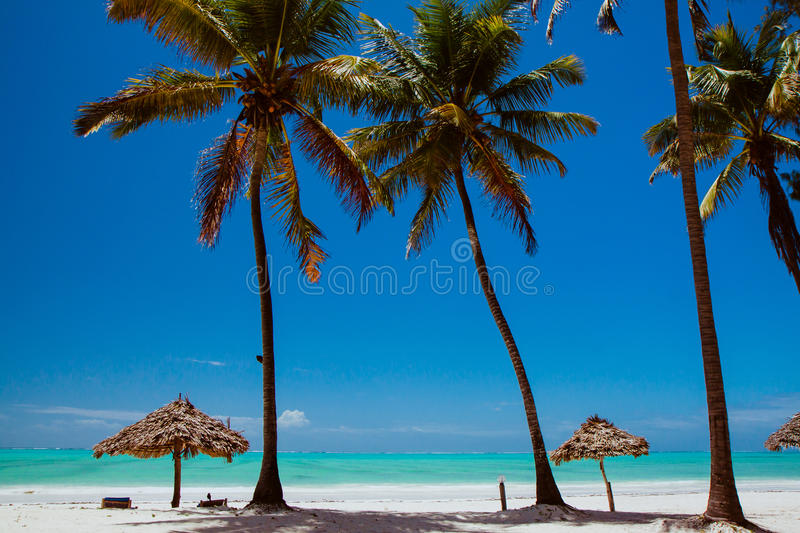 Zanzibar Paje beach. Attractive view to exotic sea beach for relaxation with palms and chaise-loungues stock image