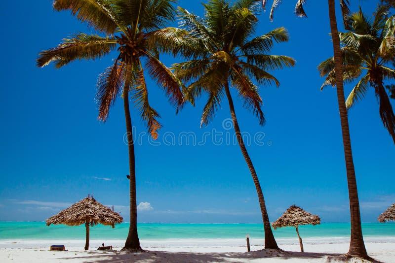 Zanzibar Paje plaża obraz stock