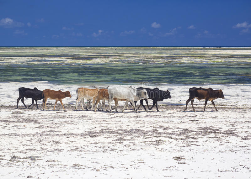 Zanzibar strand fotografering för bildbyråer