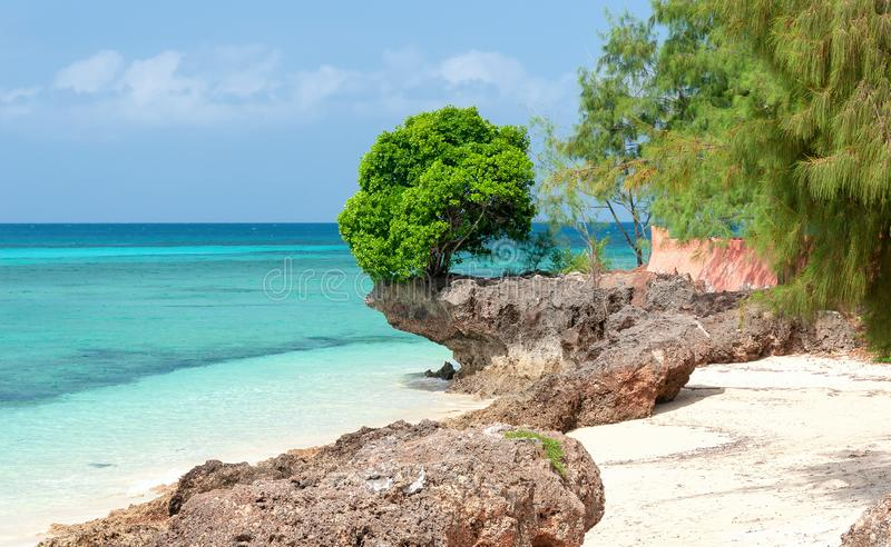 Zanzibar tropical beach and sea - Prison island - Indian ocean - Africa. View of Zanzibar tropical beach and sea - Prison island - Indian ocean - Africa royalty free stock photos
