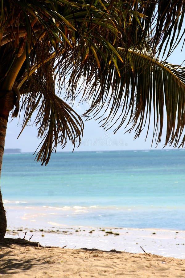 Zanzibar White Sandy Beach And Palm Tree Stock Photo