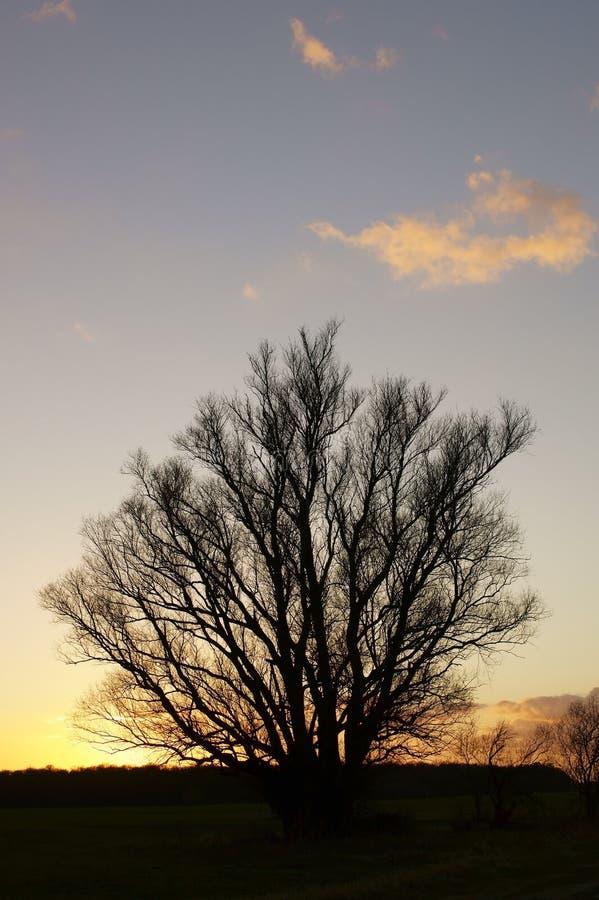 Zaogniony drzewo zdjęcia royalty free
