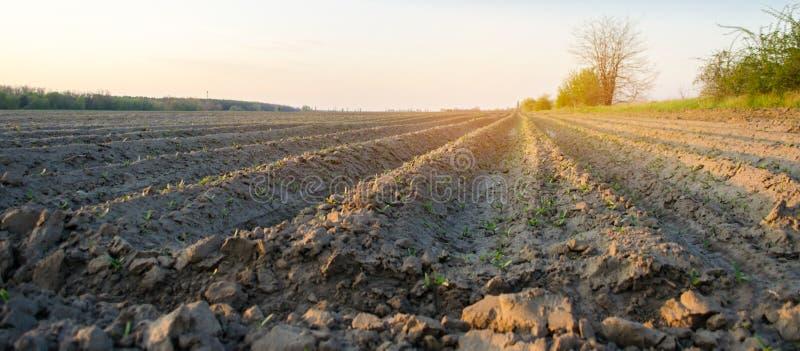 Zaorany pole na s?onecznym dniu Przygotowanie dla zasadza? warzywa Rolnictwo p?l uprawnych Mi?kka selekcyjna ostro?? obrazy royalty free