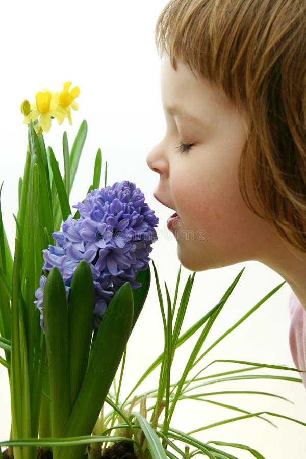 zapach wiosna obrazy royalty free