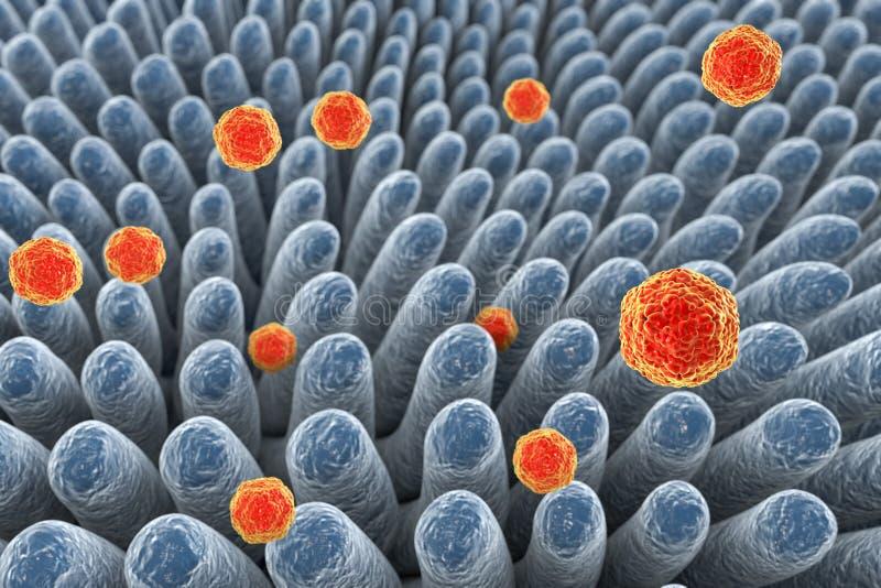 Zapalenia wątroby A wirusy infekuje jelito royalty ilustracja