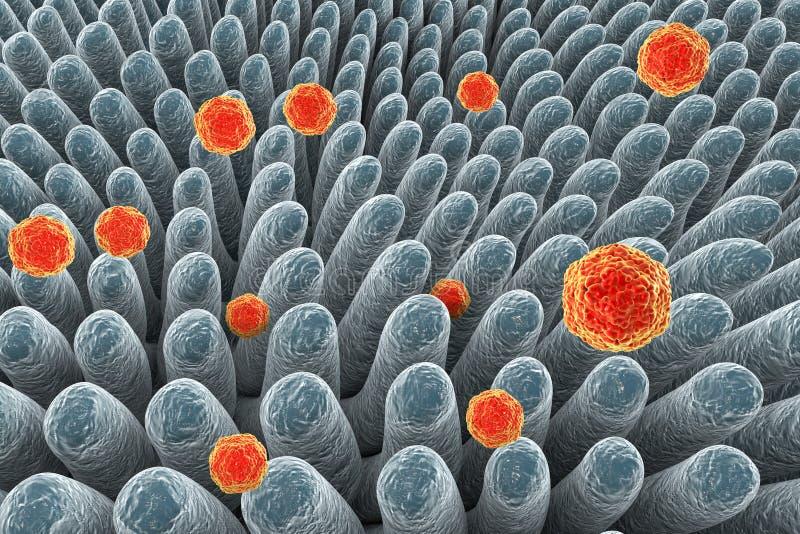 Zapalenia wątroby A wirusy infekuje jelito ilustracja wektor