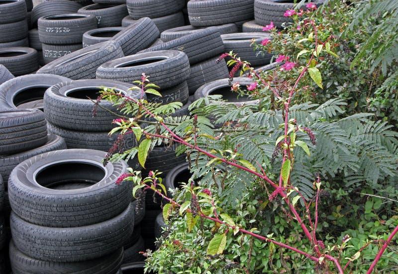 Zapas Używać opony z roślinami zdjęcie royalty free