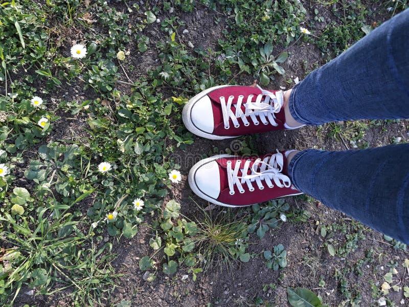Zapatillas de deporte coloreadas en la hierba foto de archivo