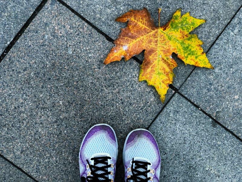 Zapato púrpura en el bloque de ladrillos Diamante de Footpath con un arce amarillo, el hermoso camino del medio ambiente natural  imágenes de archivo libres de regalías