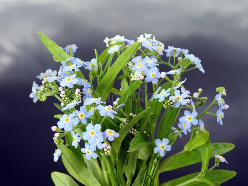 Zapomnij o moim kwiacie niedaleko pola, Litwa obraz royalty free
