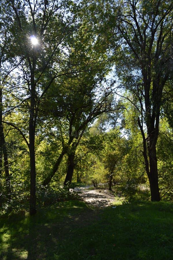 zaporozhye Promenade vers la berge photos libres de droits