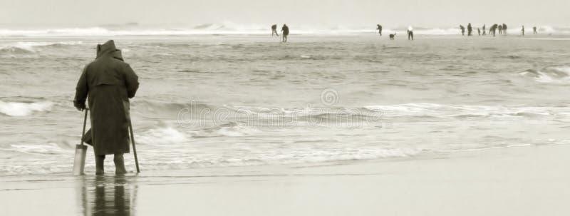Zappatori del mollusco di rasoio, litorale dell'Oregon immagine stock libera da diritti